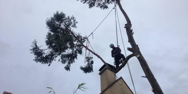Démontage eucalyptus avec rétention